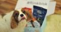 Få goodiebag med snacks, godsaker og tygg til hunden din